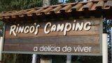 Camping Ringo's
