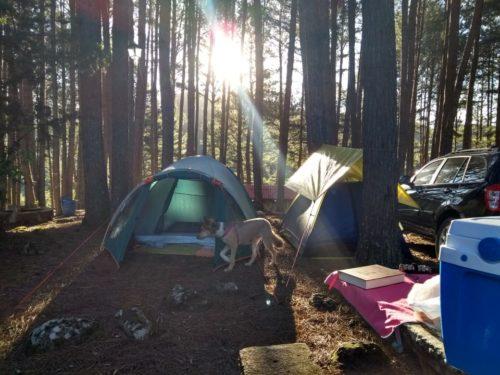 camping parque da cachoeira-canela-rs-1 - foto: Vanuza Nicolei