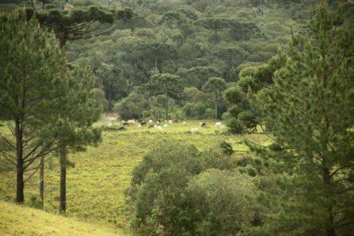 Camping Cachoeira Formosa