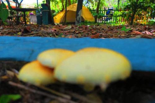 Eco Camping Flor da Moringa