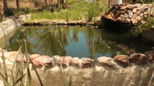 Eco Camping Flor da Moringa-Aracati-CE-2