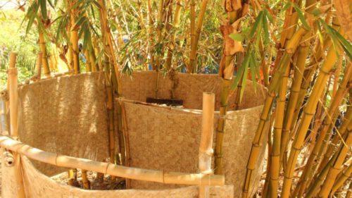 Eco Camping Flor da Moringa-Aracati-CE-3