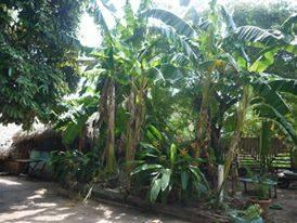 Iguanas Camping-Alter do Chão-Santarém-PA 3