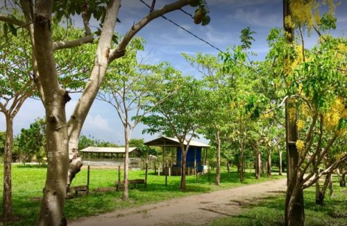 Camping Chalé Quintal Amazon