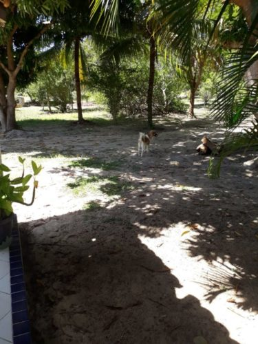 Camping Sitio Santo Antonio-itaporanda dajuda-se-12