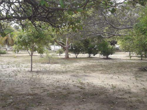 Camping Sitio Santo Antonio-itaporanda dajuda-se-15