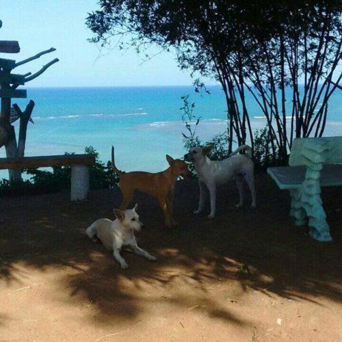 Camping Mirante Alto dos Mouras-Japaratinga-AL-8