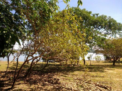 Camping Rio Xingu-são felix do xingu-PA-1