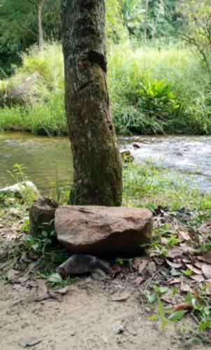 Camping Selvagem - Cachoeira Cachoeira do Rio do Alho-MAjor Gercino-2
