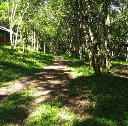 Camping do Alambique-Vista Alegre do Prata-RS-9