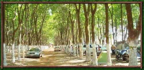 Camping Floresta
