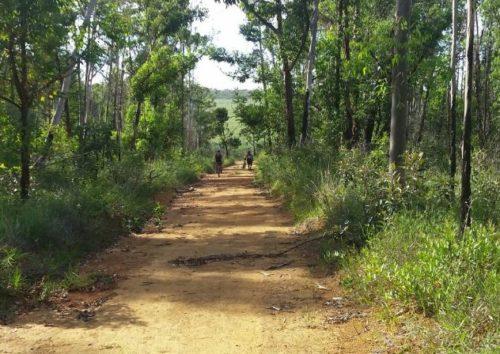 Camping Floresta Nacional de Brasília-Brasilia-DF-1