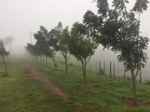 Pomaria Camping-Bananeiras-PB-1