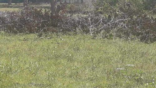 camping ibirapuera-castanhal - pr-abandonado-1