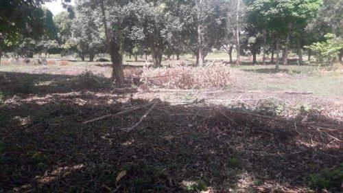 camping ibirapuera-castanhal - pr-abandonado-6