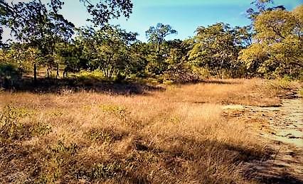 Camping ou Apoio Selvagem - Transamazônica - Barão de Grajaú
