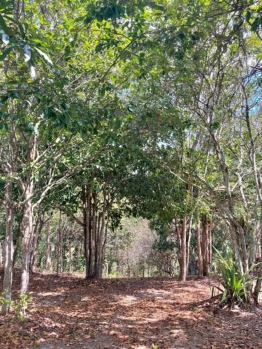 Camping-Sitio-do-Corredor-Moreno-PE-66