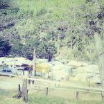 camposjordao78-4_zps47ece758-jpg